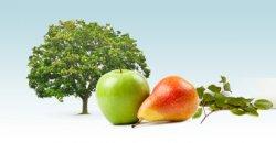 Äpfel&Bananen gratis bei rewe (Fr/Sa) Bundesweit für jedes Kind.