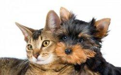 Gratis Futterprobe für Hunde und Katzen @bosch-tiernahrung.de