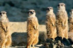 Kölner Zoo Tageskarte für 8,50€ statt 17,50€ @Travelbird.nl