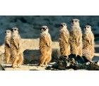 Zoo Köln + Eintritt ins Aquarium für 9,45€ [statt 17,50€] @Travelbird.nl