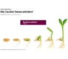 hr-fersehen – Zucchini-Samen gratis bestellen