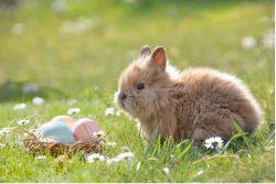 Fünf Geschenkideen für Ostern